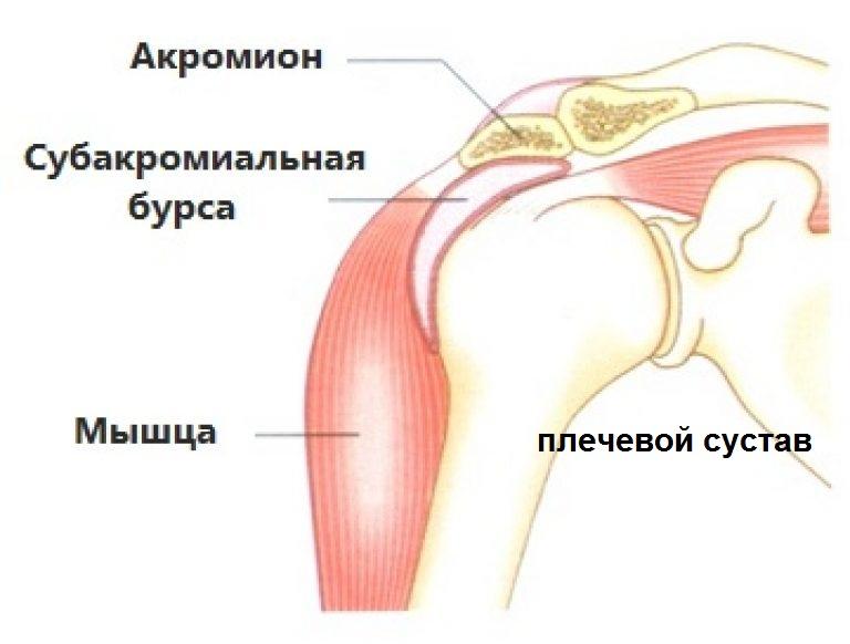 Барсучий жир и лечение болей в суставах